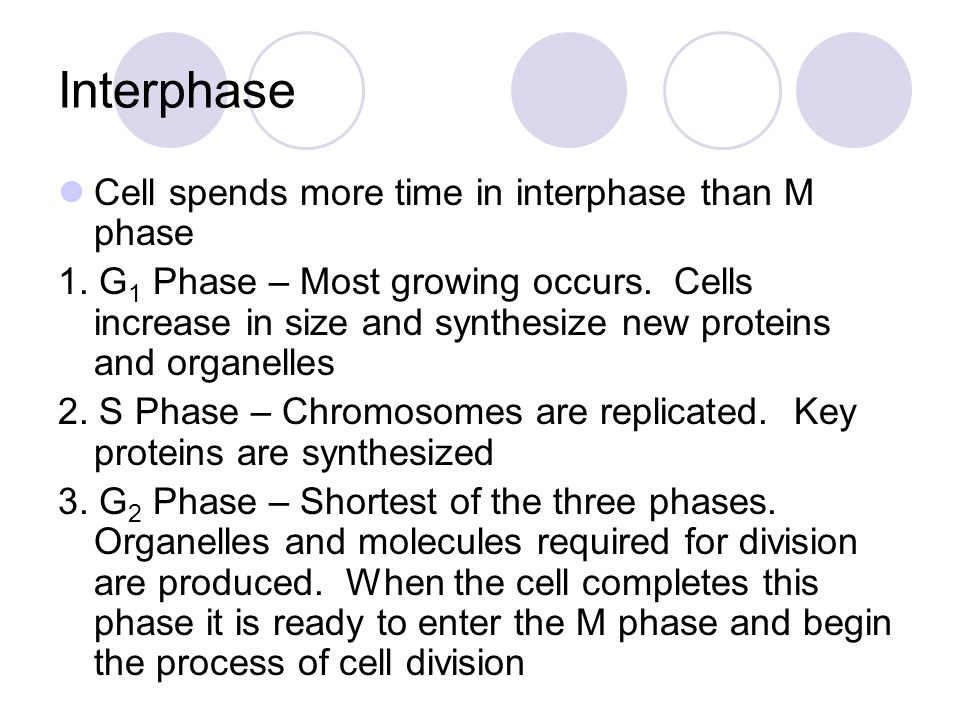 Interphase Cell spends more time in interphase than M phase