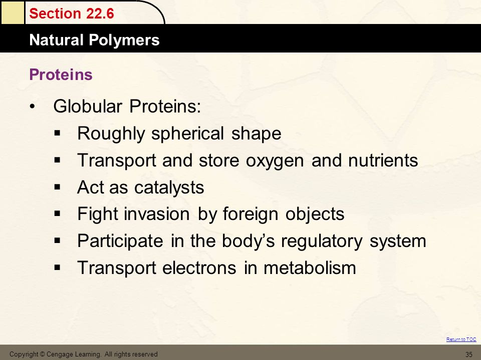 Roughly spherical shape Transport and store oxygen and nutrients