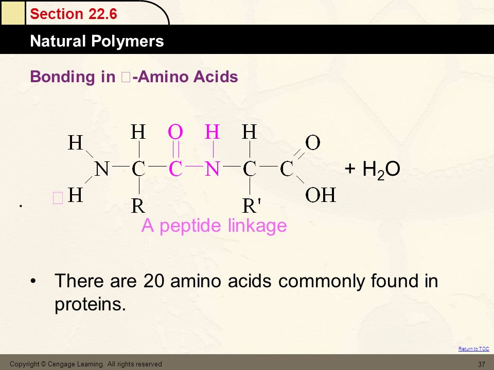 Bonding in -Amino Acids