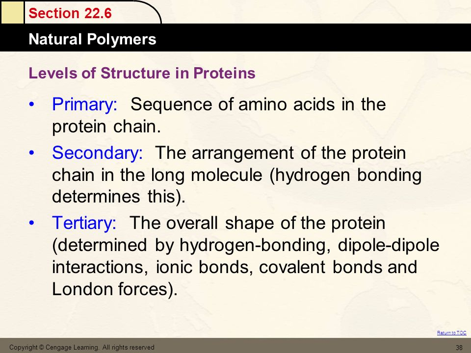 Levels of Structure in Proteins
