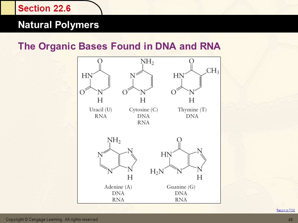 The Organic Bases Found in DNA and RNA