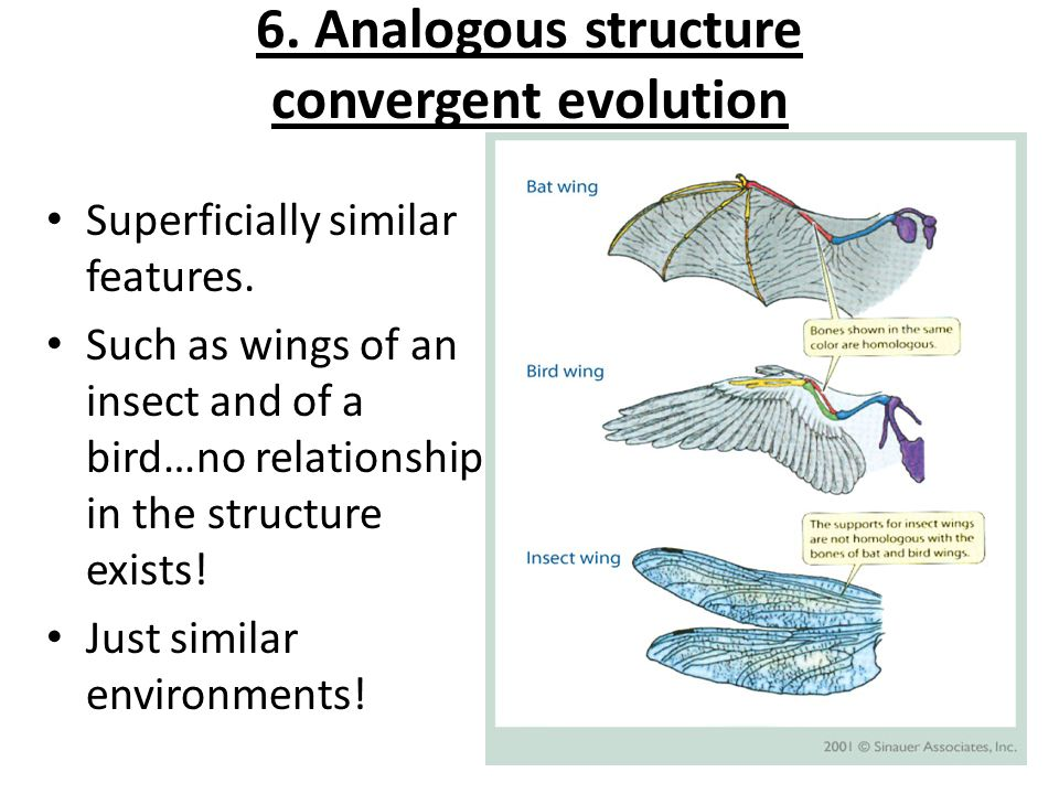 6. Analogous structure convergent evolution