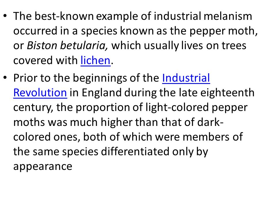 The best-known example of industrial melanism occurred in a species known as the pepper moth, or Biston betularia, which usually lives on trees covered with lichen.