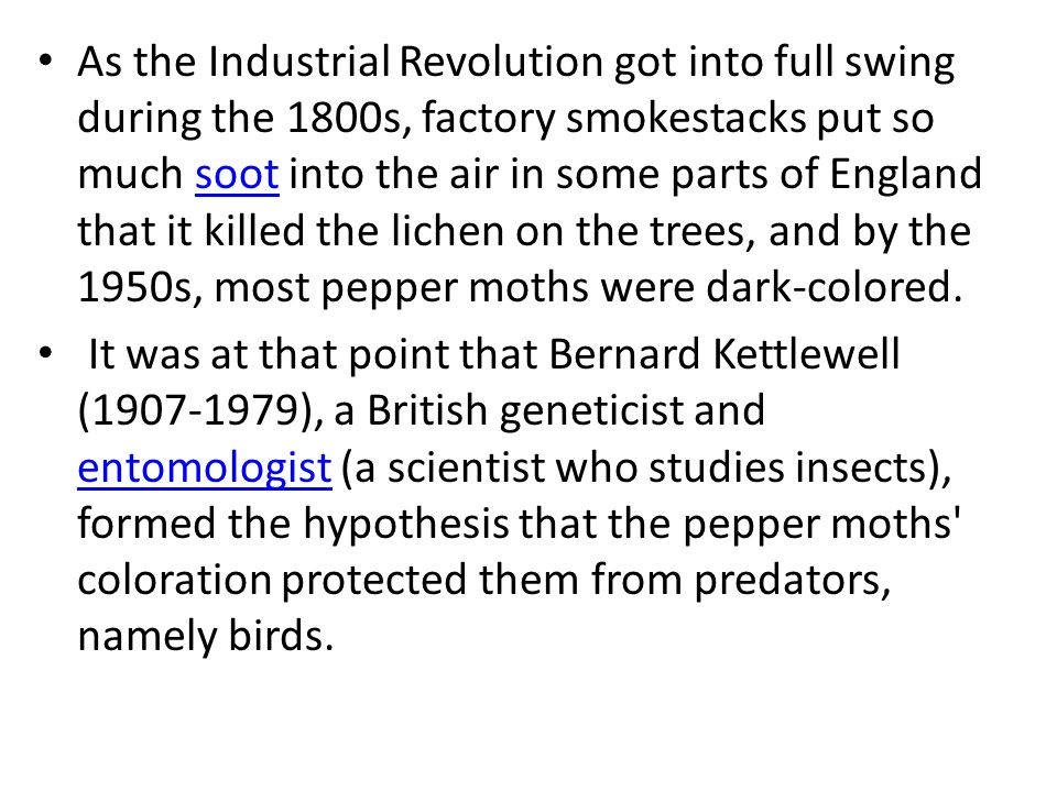 As the Industrial Revolution got into full swing during the 1800s, factory smokestacks put so much soot into the air in some parts of England that it killed the lichen on the trees, and by the 1950s, most pepper moths were dark-colored.