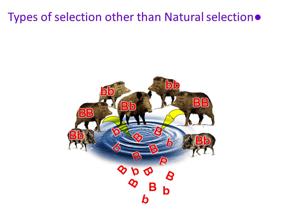 Types of selection other than Natural selection●