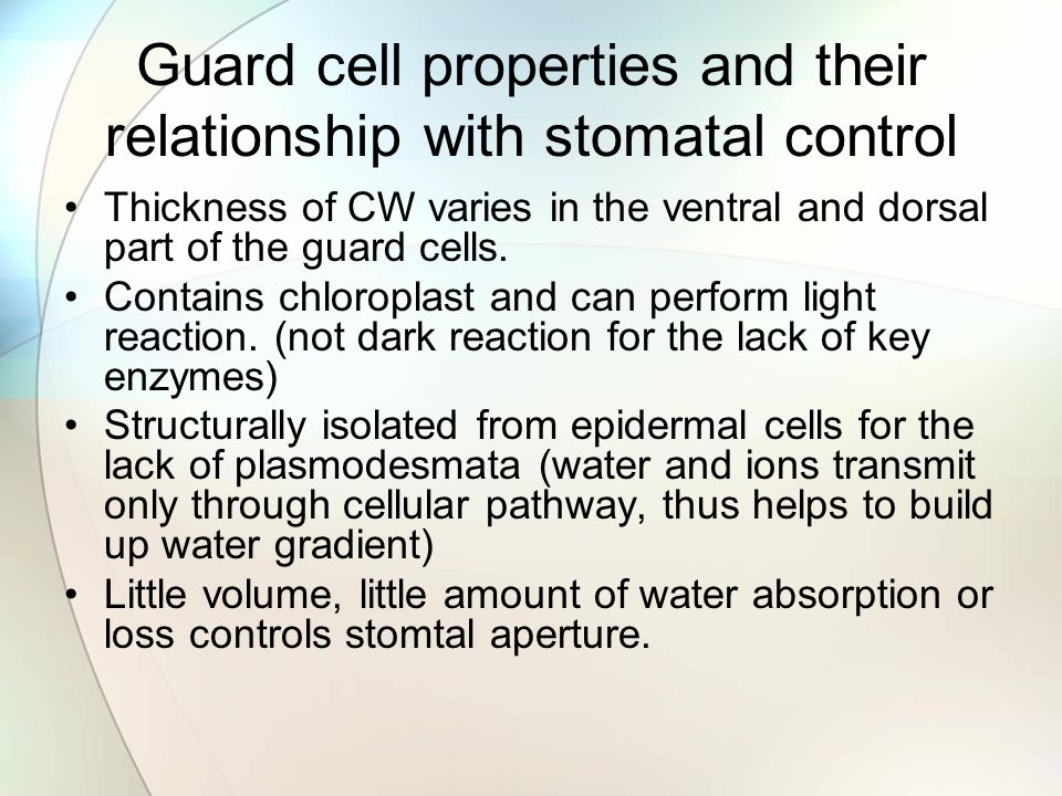 Guard cell properties and their relationship with stomatal control