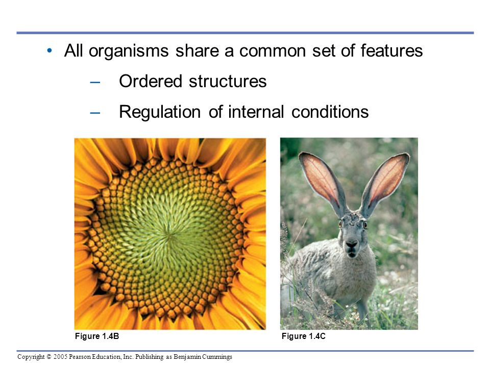 All organisms share a common set of features Ordered structures