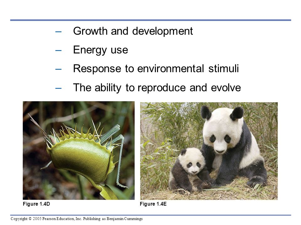 Growth and development Energy use Response to environmental stimuli