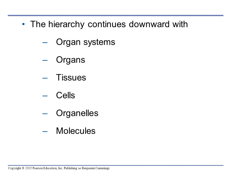 The hierarchy continues downward with Organ systems Organs Tissues Cells Organelles Molecules