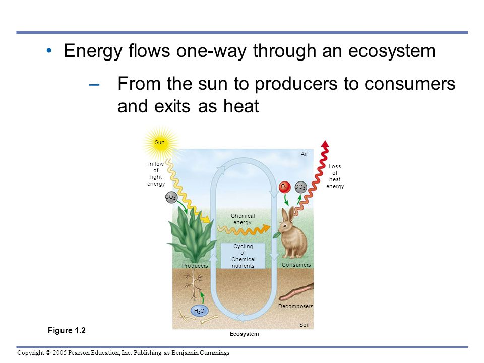 Energy flows one-way through an ecosystem