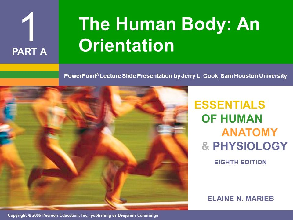 The Human Body: An Orientation - ppt video online download