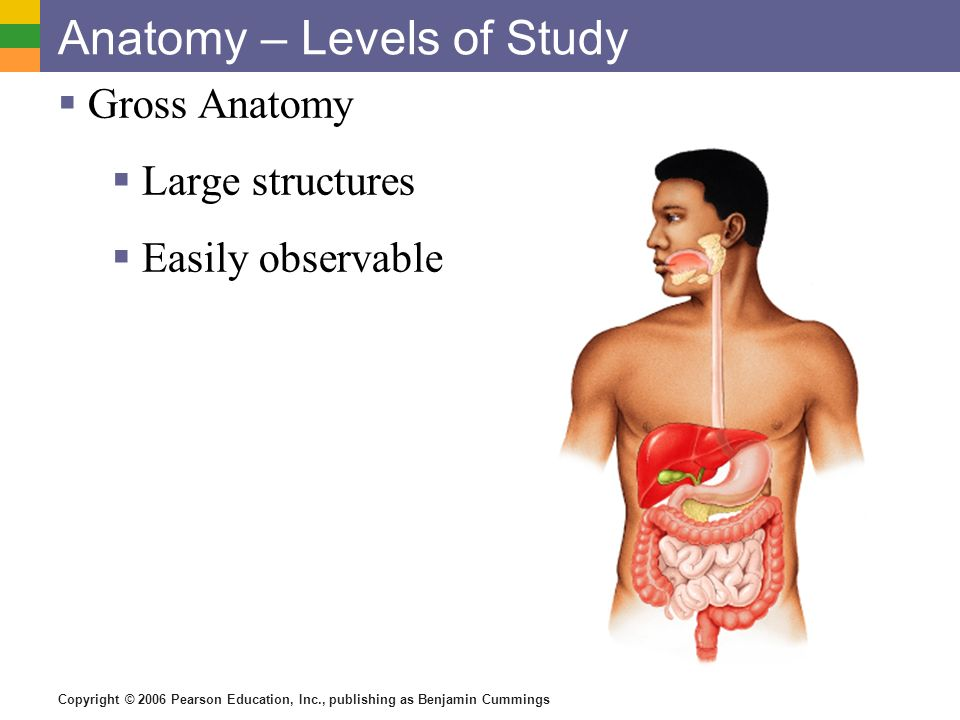 Anatomy – Levels of Study