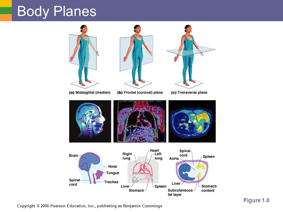 Body Planes Figure 1.6