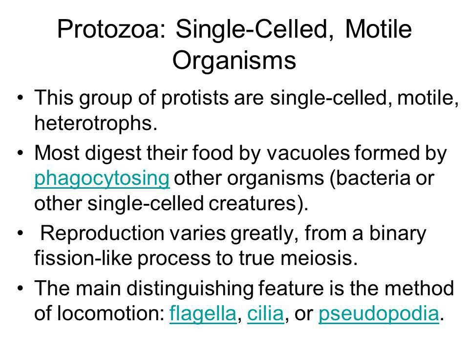 Protozoa: Single-Celled, Motile Organisms