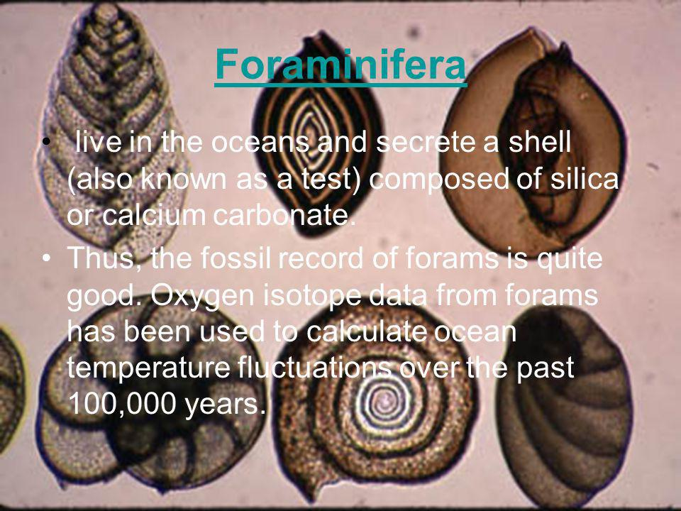 Foraminifera live in the oceans and secrete a shell (also known as a test) composed of silica or calcium carbonate.