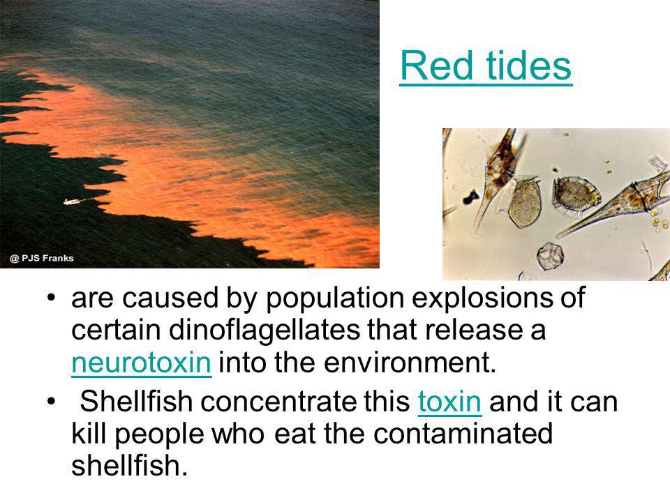 Red tides are caused by population explosions of certain dinoflagellates that release a neurotoxin into the environment.