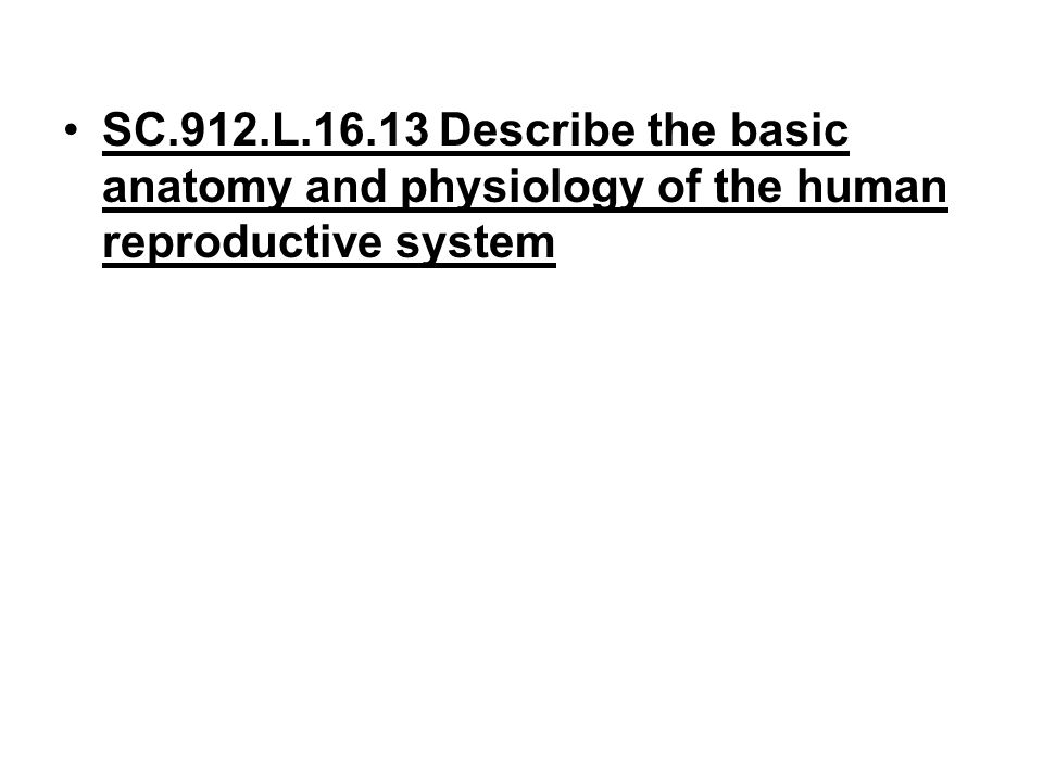 SC.912.L.16.13 Describe the basic anatomy and physiology of the human reproductive system