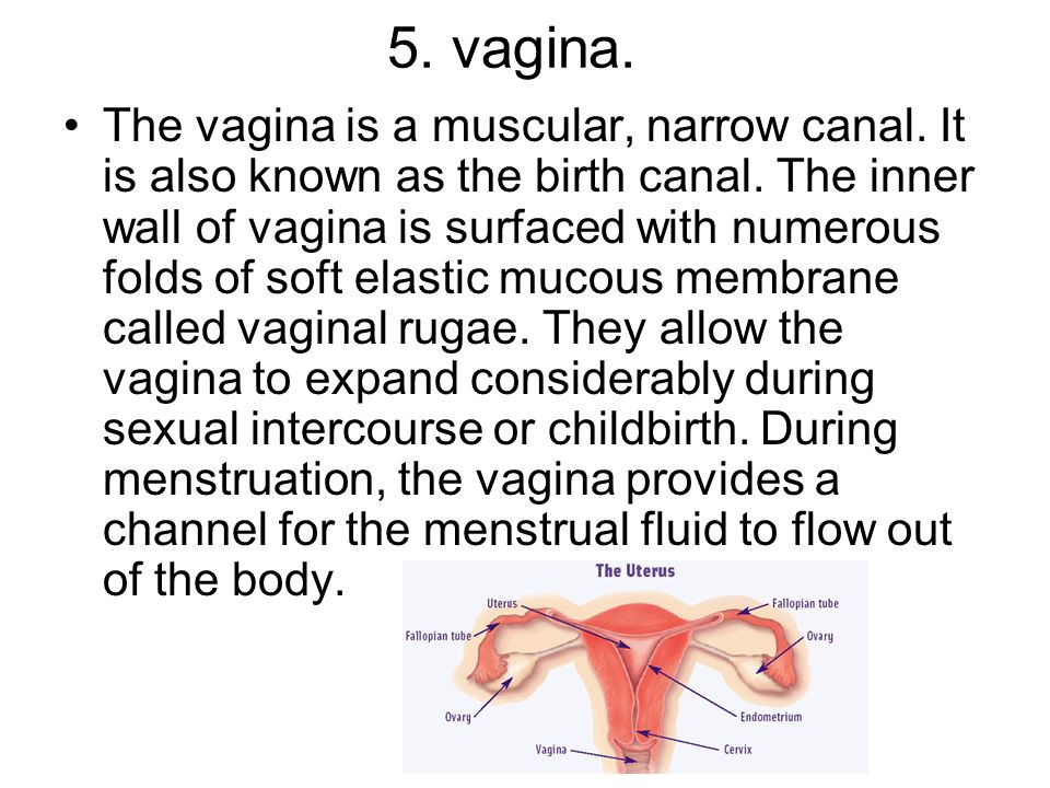 5. vagina.