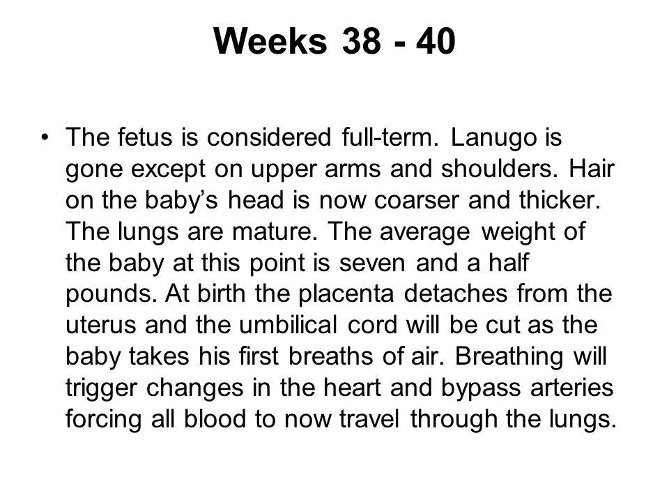 Weeks 38 - 40