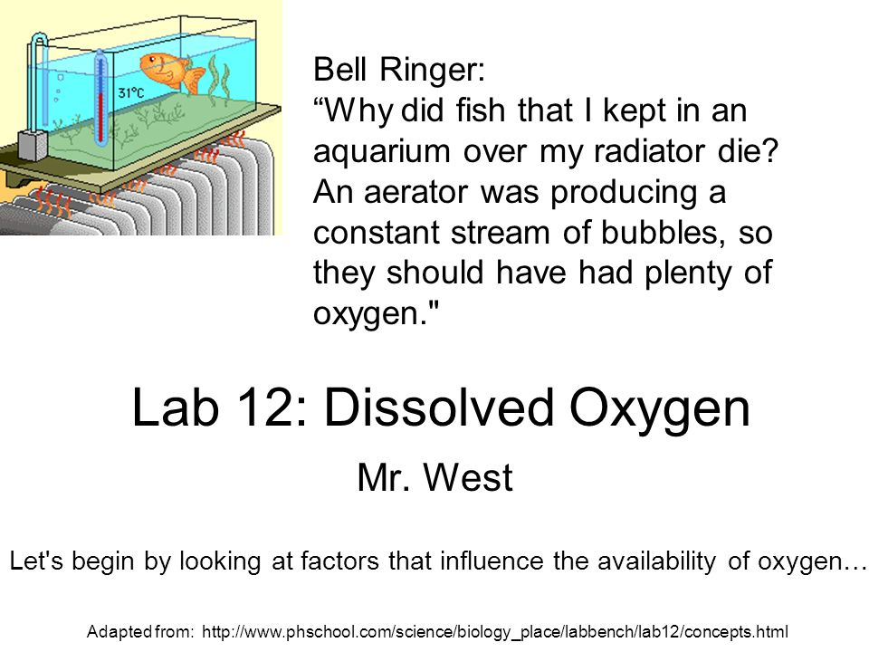 Lab 12: Dissolved Oxygen Mr. West Bell Ringer:
