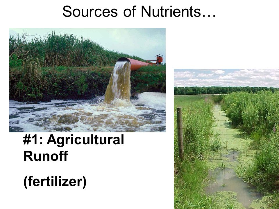 Sources of Nutrients… #1: Agricultural Runoff (fertilizer)