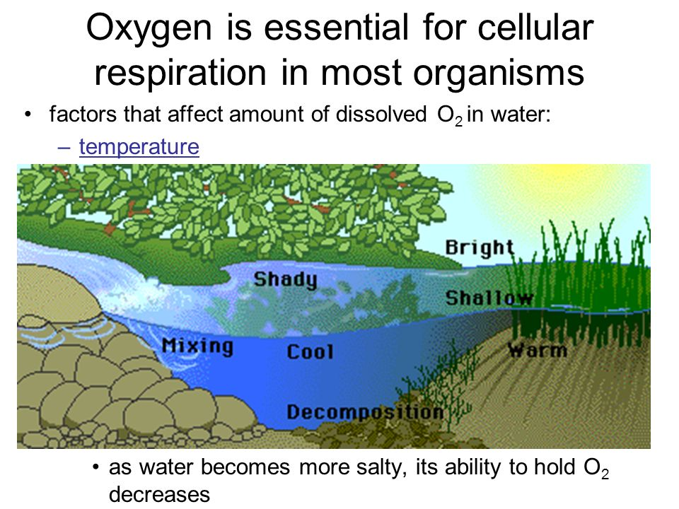 Oxygen is essential for cellular respiration in most organisms
