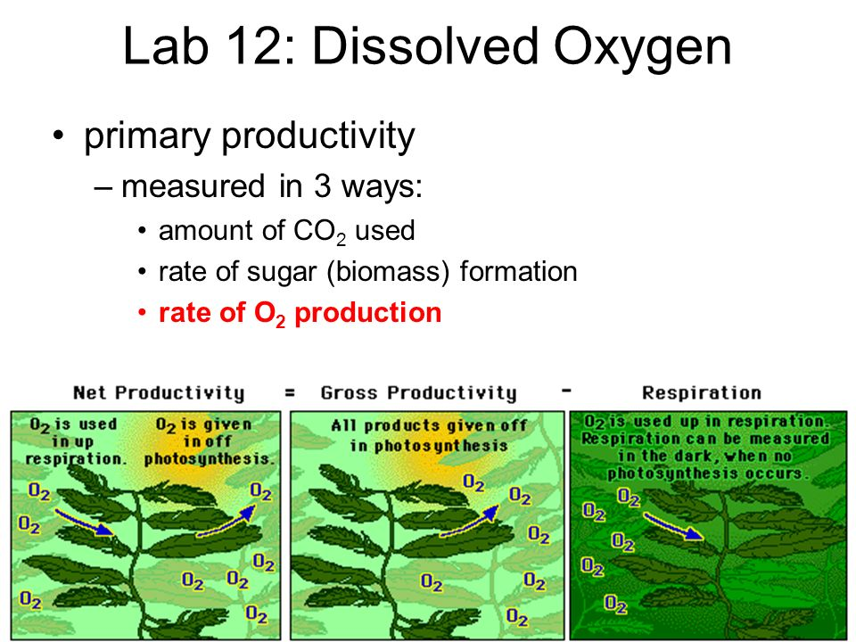 Lab 12: Dissolved Oxygen primary productivity measured in 3 ways:
