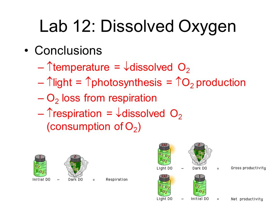 Lab 12: Dissolved Oxygen Conclusions temperature = dissolved O2