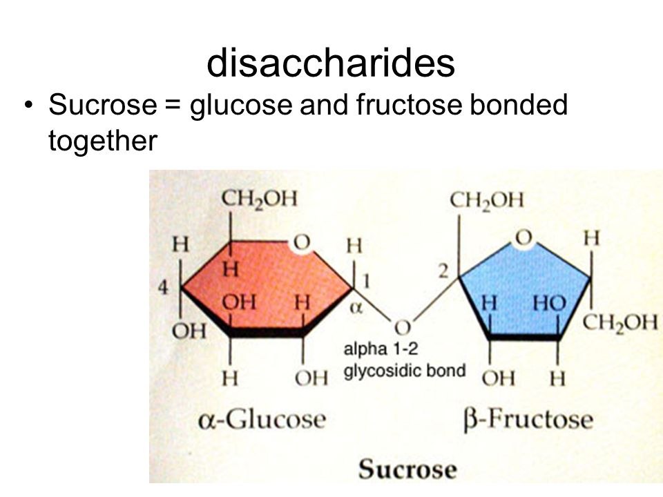 disaccharides Sucrose = glucose and fructose bonded together