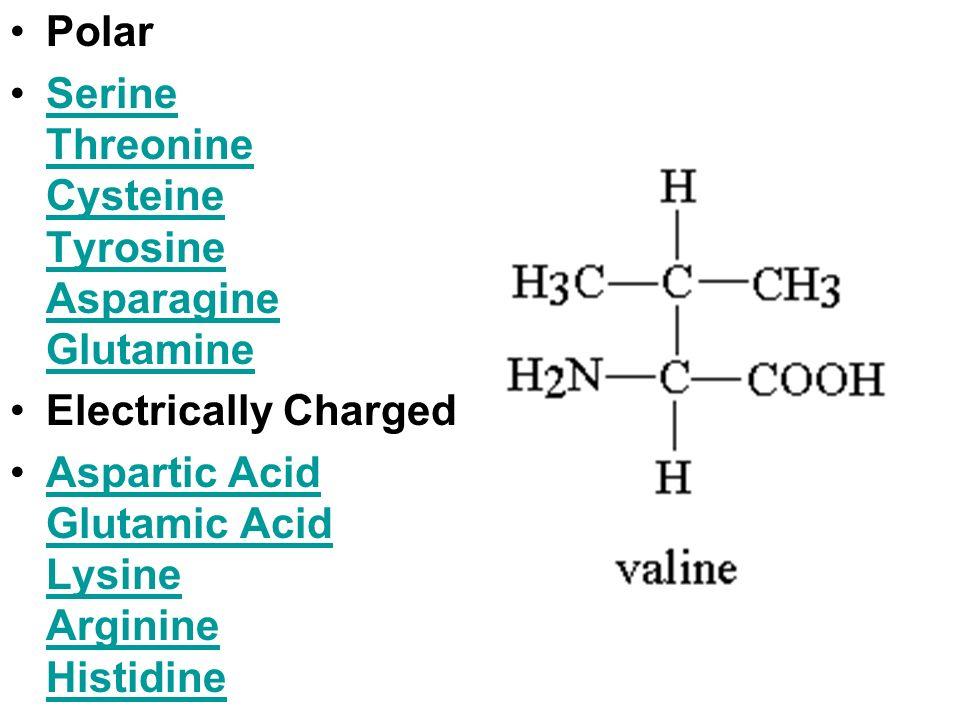 Polar Serine Threonine Cysteine Tyrosine Asparagine Glutamine.