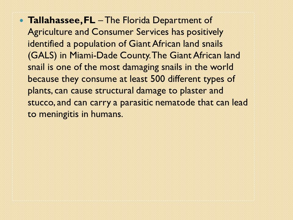 Tallahassee, FL – The Florida Department of Agriculture and Consumer Services has positively identified a population of Giant African land snails (GALS) in Miami-Dade County.