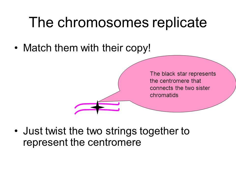 The chromosomes replicate