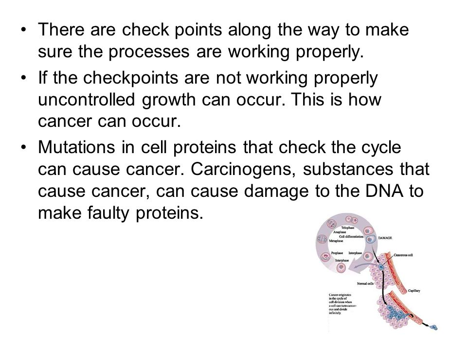 There are check points along the way to make sure the processes are working properly.