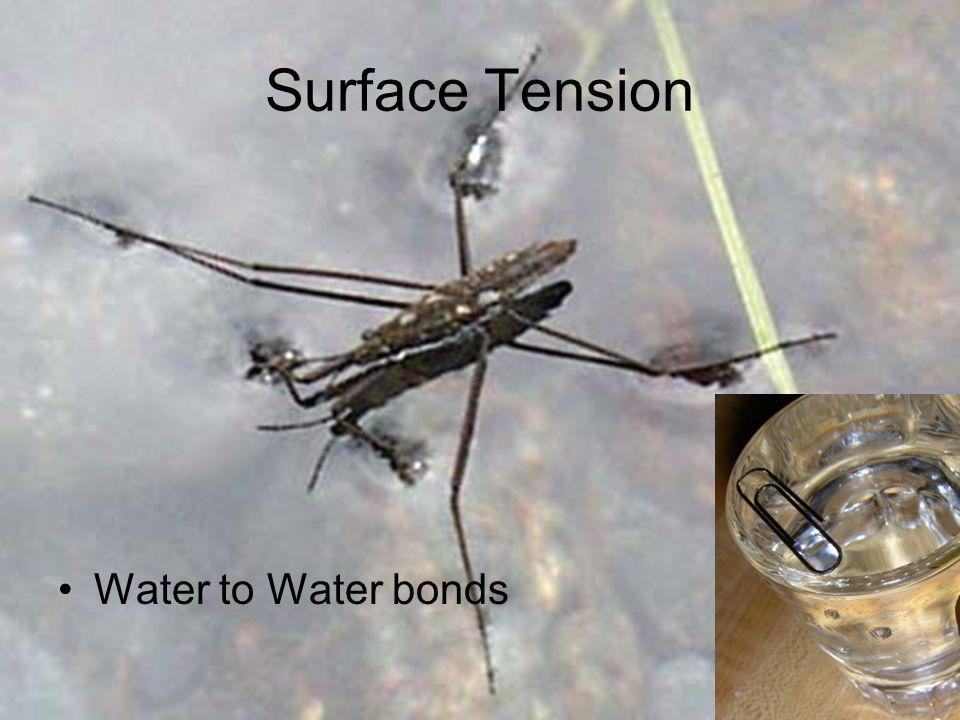 Surface Tension Water to Water bonds