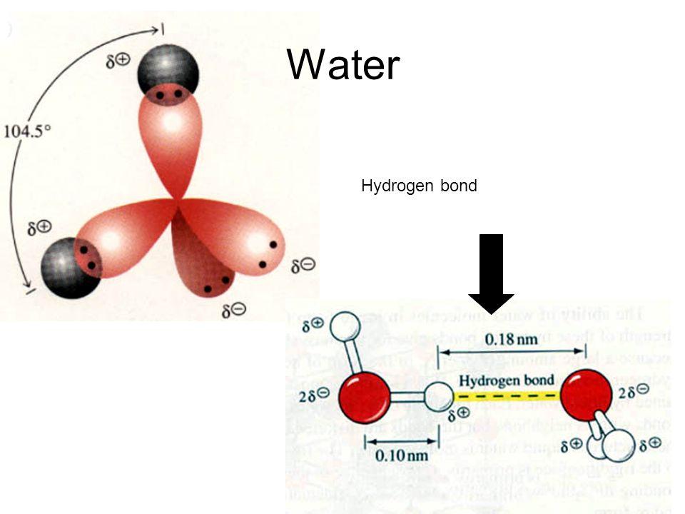 Water Hydrogen bond