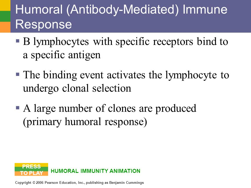 Humoral (Antibody-Mediated) Immune Response