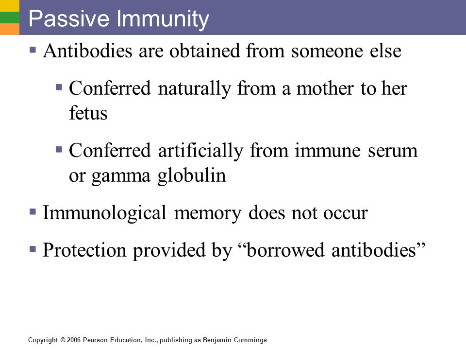 Passive Immunity Antibodies are obtained from someone else