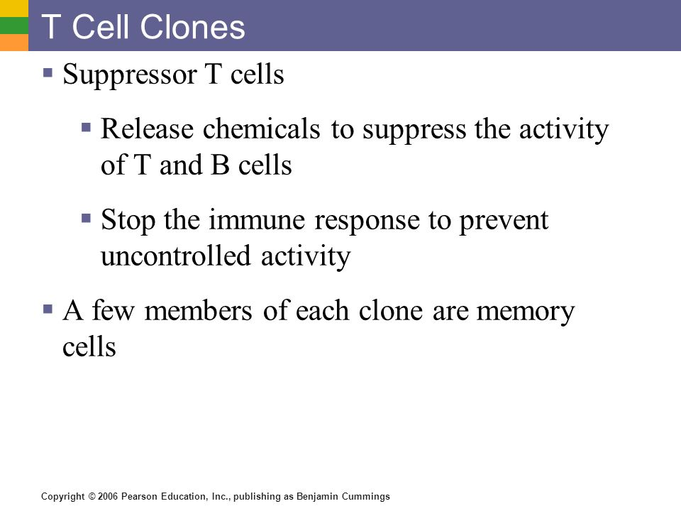T Cell Clones Suppressor T cells