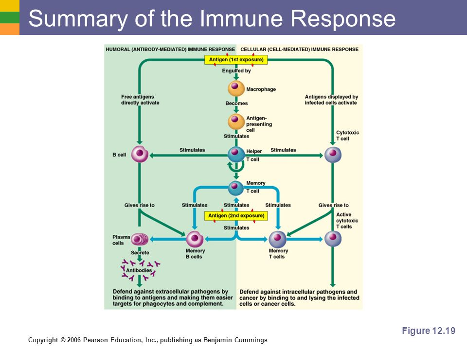 Summary of the Immune Response