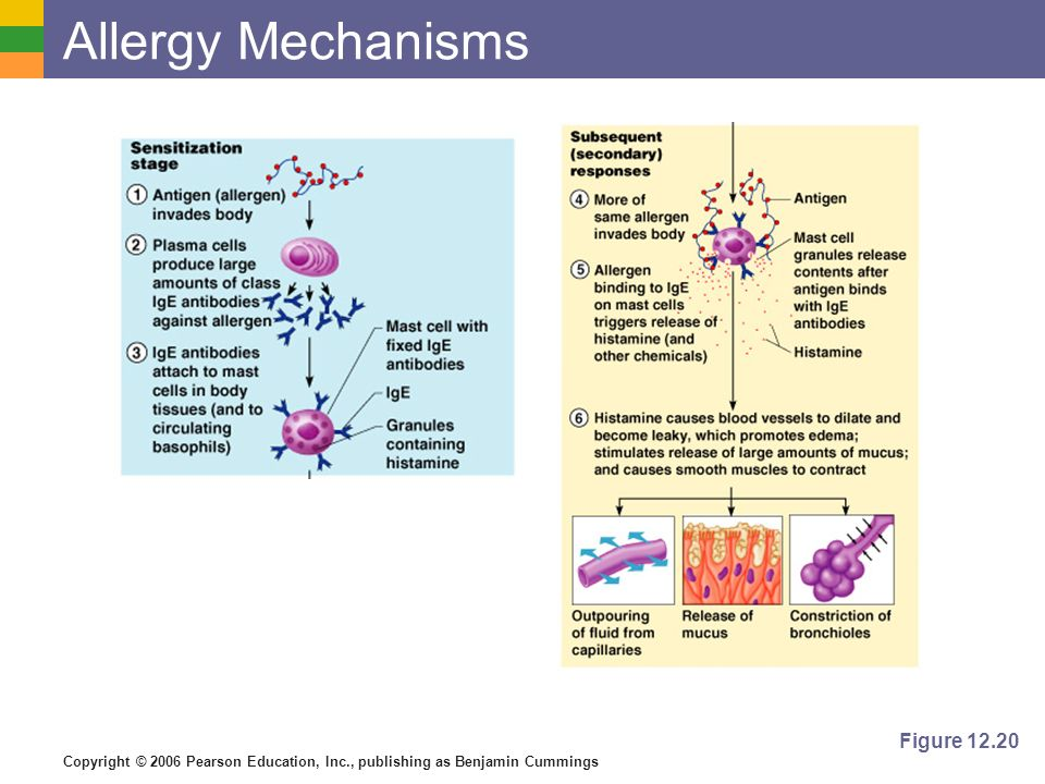 Allergy Mechanisms Figure 12.20