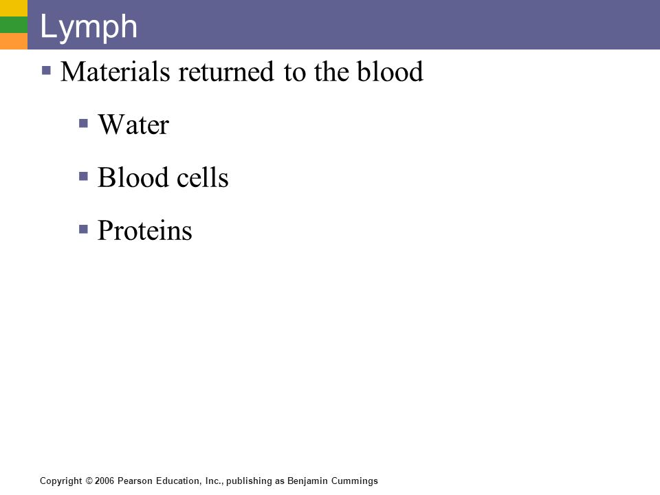 Lymph Materials returned to the blood Water Blood cells Proteins