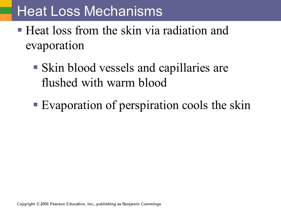 Heat Loss Mechanisms Heat loss from the skin via radiation and evaporation. Skin blood vessels and capillaries are flushed with warm blood.