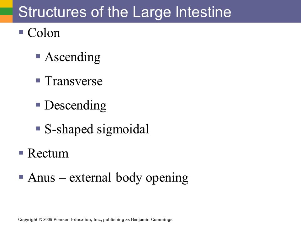 Structures of the Large Intestine