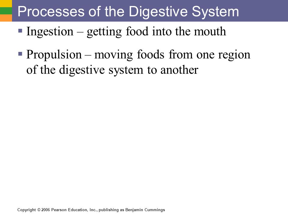 Processes of the Digestive System
