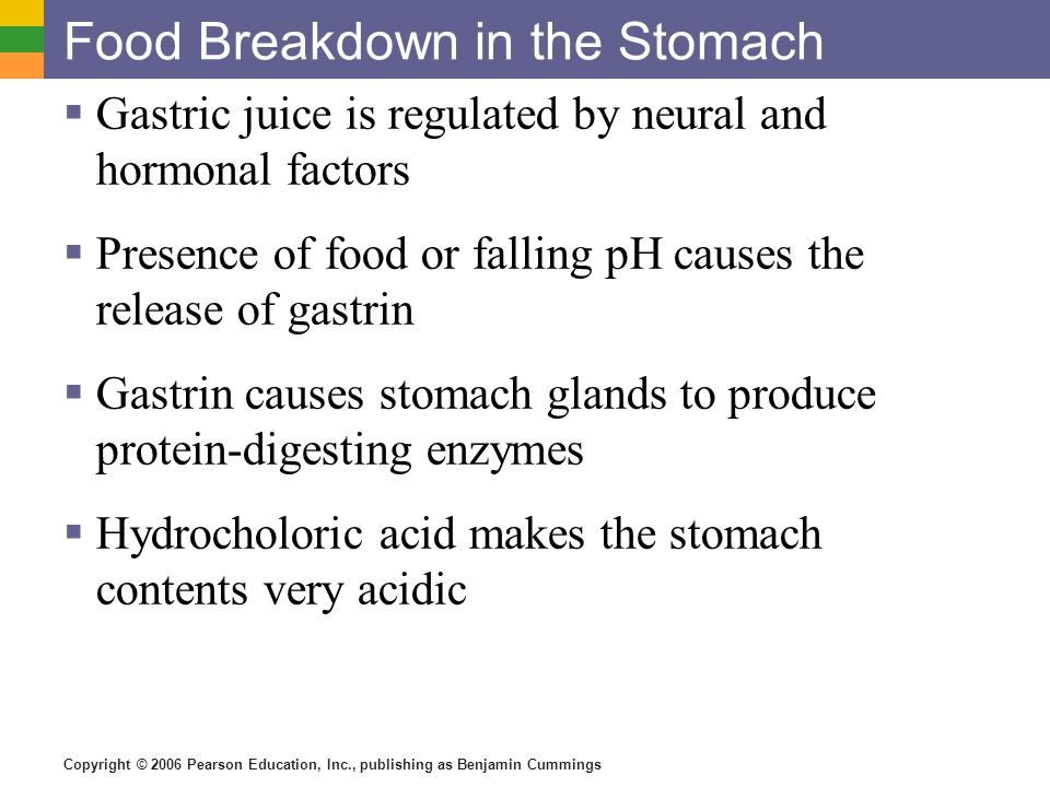 Food Breakdown in the Stomach