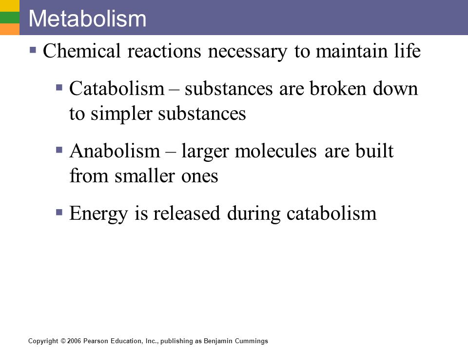 Metabolism Chemical reactions necessary to maintain life