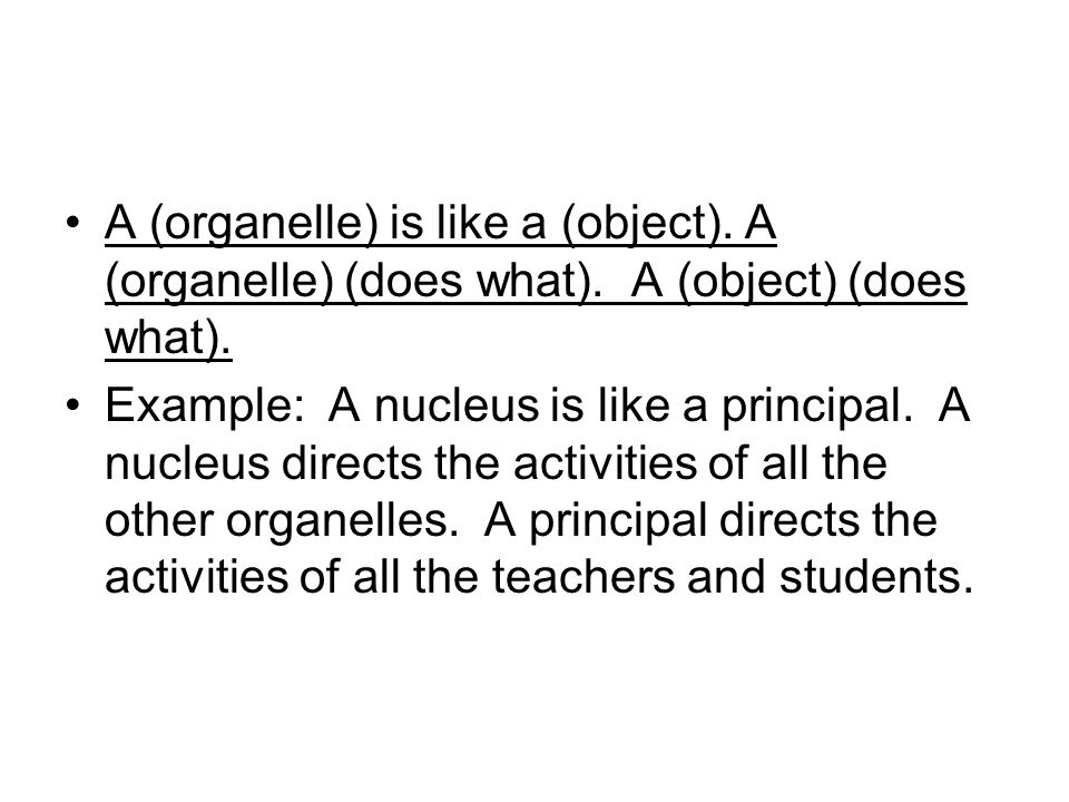 A (organelle) is like a (object). A (organelle) (does what)