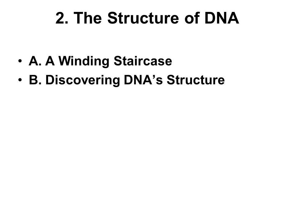 2. The Structure of DNA A. A Winding Staircase