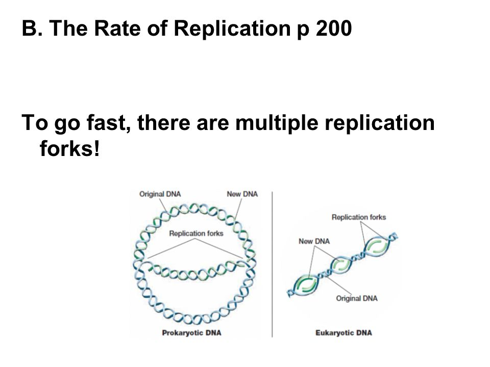 B. The Rate of Replication p 200