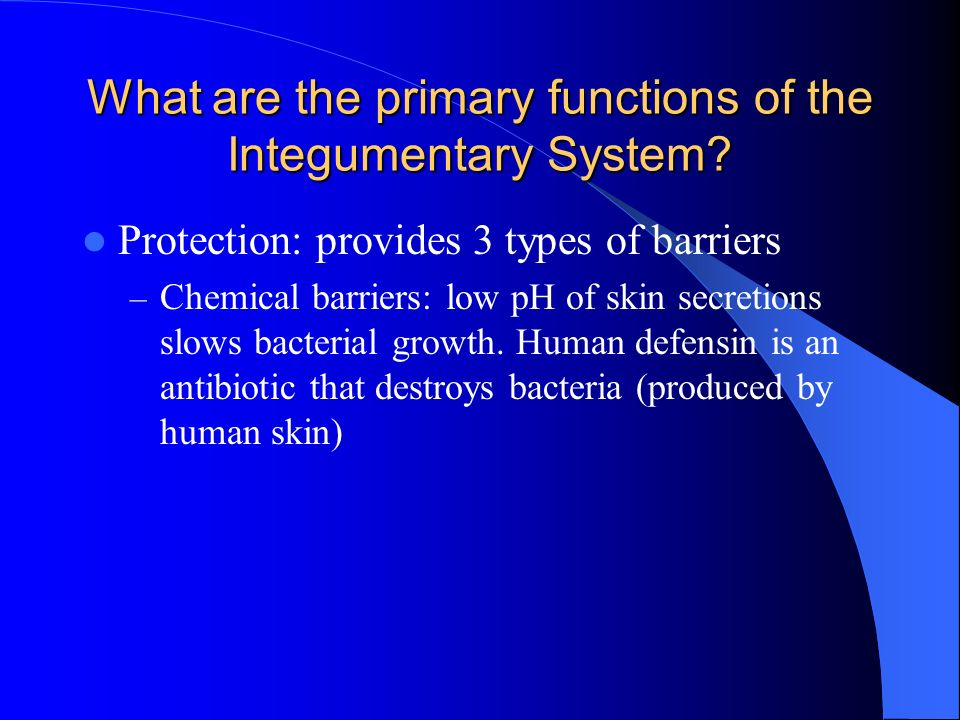 What are the primary functions of the Integumentary System